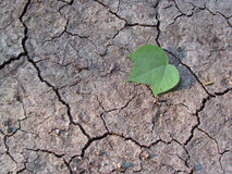 Leaf on parched earth Royalty Free Stock Photography