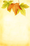 Leaf and parchment frame Royalty Free Stock Images