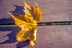 Leaf on a park bench Stock Photography