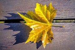 Leaf on a park bench Stock Photos