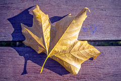 Leaf on a park bench Royalty Free Stock Photos