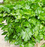 Leaf parsley Stock Photography