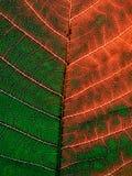 Leaf pattern. Stock Photos