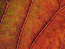 Leaf pattern. Royalty Free Stock Images