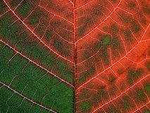 Leaf pattern. Royalty Free Stock Photography