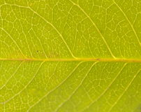 Leaf pattern Stock Photos
