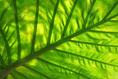 Leaf Pattern Royalty Free Stock Photos