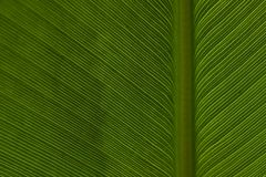 Leaf Pattern 2 Royalty Free Stock Photos