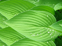 Leaf Pattern Stock Image