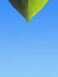 Leaf pattern background. Closeup of leaf on blue graduated background Royalty Free Stock Image