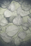 Leaf pattern on cement floor Royalty Free Stock Photos