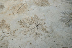 Leaf Pattern On Cement Floor. Leaf Pattern On Cement Floor, Somewhere In Thailand royalty free stock image