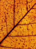 Leaf pattern. Close view of yellow dried leaf Stock Image