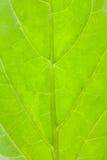Leaf pattern closeup Stock Photos
