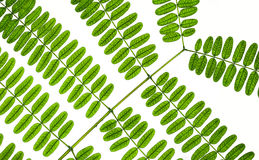 Leaf pattern details Royalty Free Stock Photo