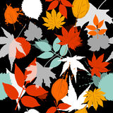Leaf pattern fall color  black background Royalty Free Stock Images