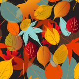 Leaf pattern fall color  black background Royalty Free Stock Photography