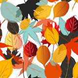 Leaf pattern fall color Royalty Free Stock Photography