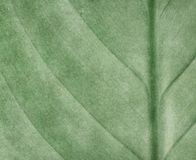Leaf pattern paint background Royalty Free Stock Images