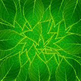 Leaf pattern seamless Royalty Free Stock Photos