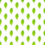 Leaf pattern seamless Royalty Free Stock Photography