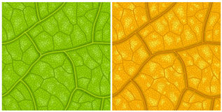 Leaf pattern Royalty Free Stock Photography