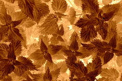 Leaf pattern Stock Photo