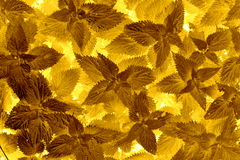 Leaf pattern gold Royalty Free Stock Photos