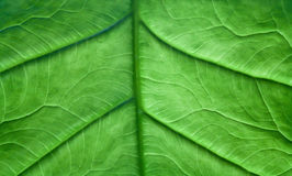 Leaf Patterns Royalty Free Stock Photos