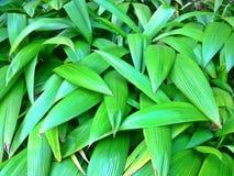 Leaf patterns of ferns Stock Images