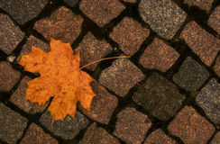 Leaf on pavement Royalty Free Stock Image