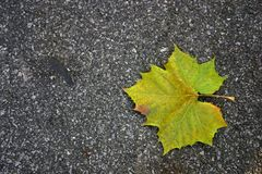 Leaf and pavement. A single green leaf that has fallen into the street. The leaf is starting to change colors (autumn Stock Images