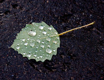 Leaf on pavement after the rain Royalty Free Stock Photo