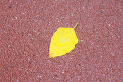 Leaf on Pavement. A vibrant yellow leaf lying on the wet red pavement Stock Image