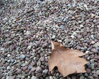 Leaf in Pebbles Royalty Free Stock Image