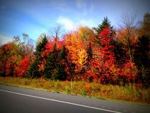 Leaf Peeping Colors of Fall Foliage Beautiful Autumn Scene. Stunning colorful autumn scene on road with all the red orange yellow green  colors of fall leaves Royalty Free Stock Photo