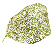 Leaf perforated by vermin Stock Images