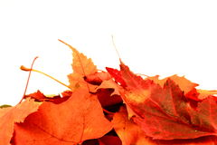 Leaf0. A photo with autumne leaves Royalty Free Stock Photography