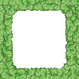 Leaf photo frame border Royalty Free Stock Photo