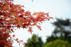 Leaf Stock Photos