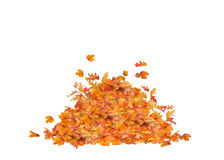 Leaf Pile Isolated. Pile heap of Fall Leaves Isolated, orange, red, yellow, and brown colors Stock Photo