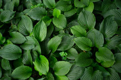Leaf. A pile of leaves in the summer Royalty Free Stock Photography