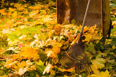 Leaf pile and rake Stock Photo