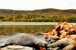 Leaf pile on river shore with majestic autumn forest Royalty Free Stock Photo
