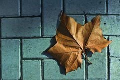 A leaf of plane tree. On the floor Royalty Free Stock Photo