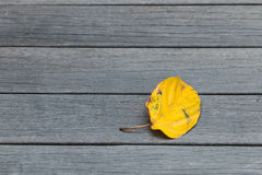 Leaf on the planks. Yellow leaf on the planks in autumn Royalty Free Stock Photography