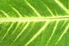 Leaf of a plant Stock Photography
