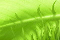 Leaf of a plant Royalty Free Stock Images