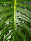 Leaf of the plant Royalty Free Stock Photo