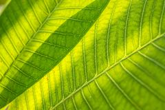 Leaf of a plant Royalty Free Stock Image